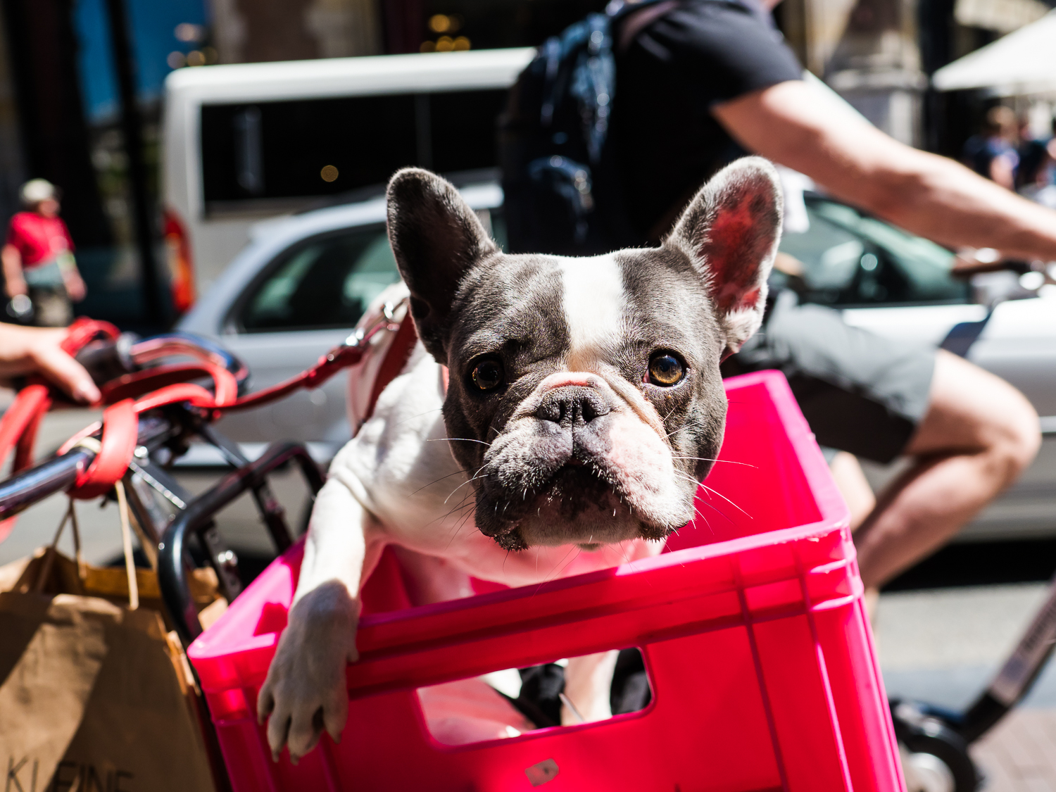 This is Holland, this is Amsterdam! Dogs are transported in many ways, preferably by bike in the city center. I made this photo in July 2018 on a very warm day. In the summer I see myself post-processing more photos in color than I do in the winter. This French bulldog deserves a place in my   Street Dogs   series.  Olympus OM-D E-M1 Mark 2 with Olympus M.ZUIKO 17mm 1:1.2 PRO
