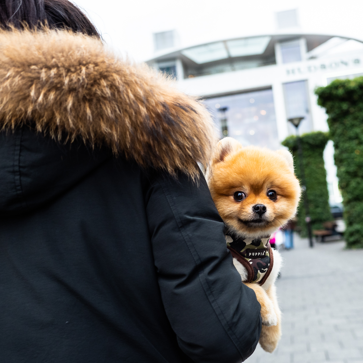 this cute little dog in both photos. They both have their positives. I connection between the furry colar of her coat and the fur of the dog is more clear for me.