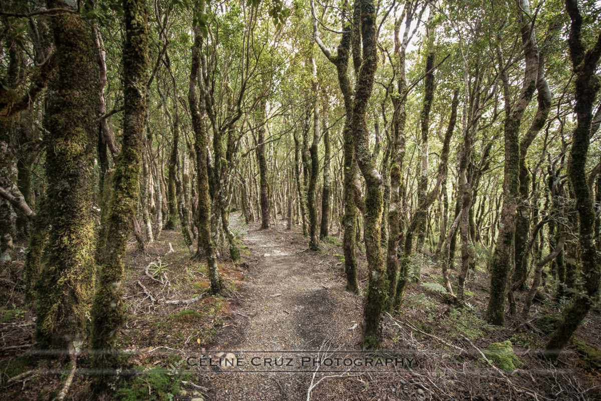 Mount Holdsworth, Powel Hut Trail