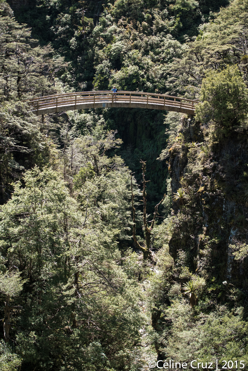 Bridge on Rangiwahia Hut trail