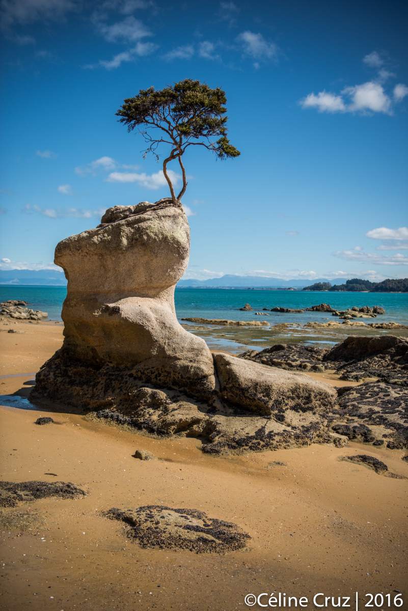 Beach along   the Abel Tasman track