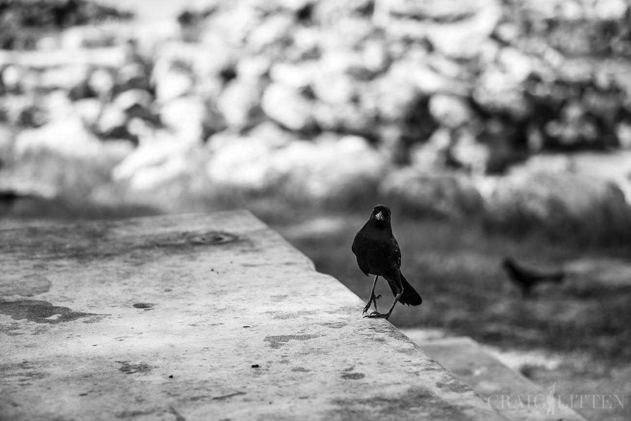 ©Craig Litten
