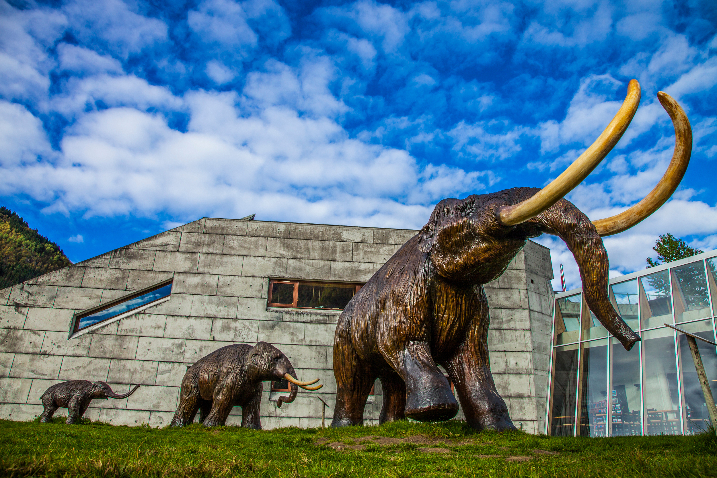 A woolly mammoth family.