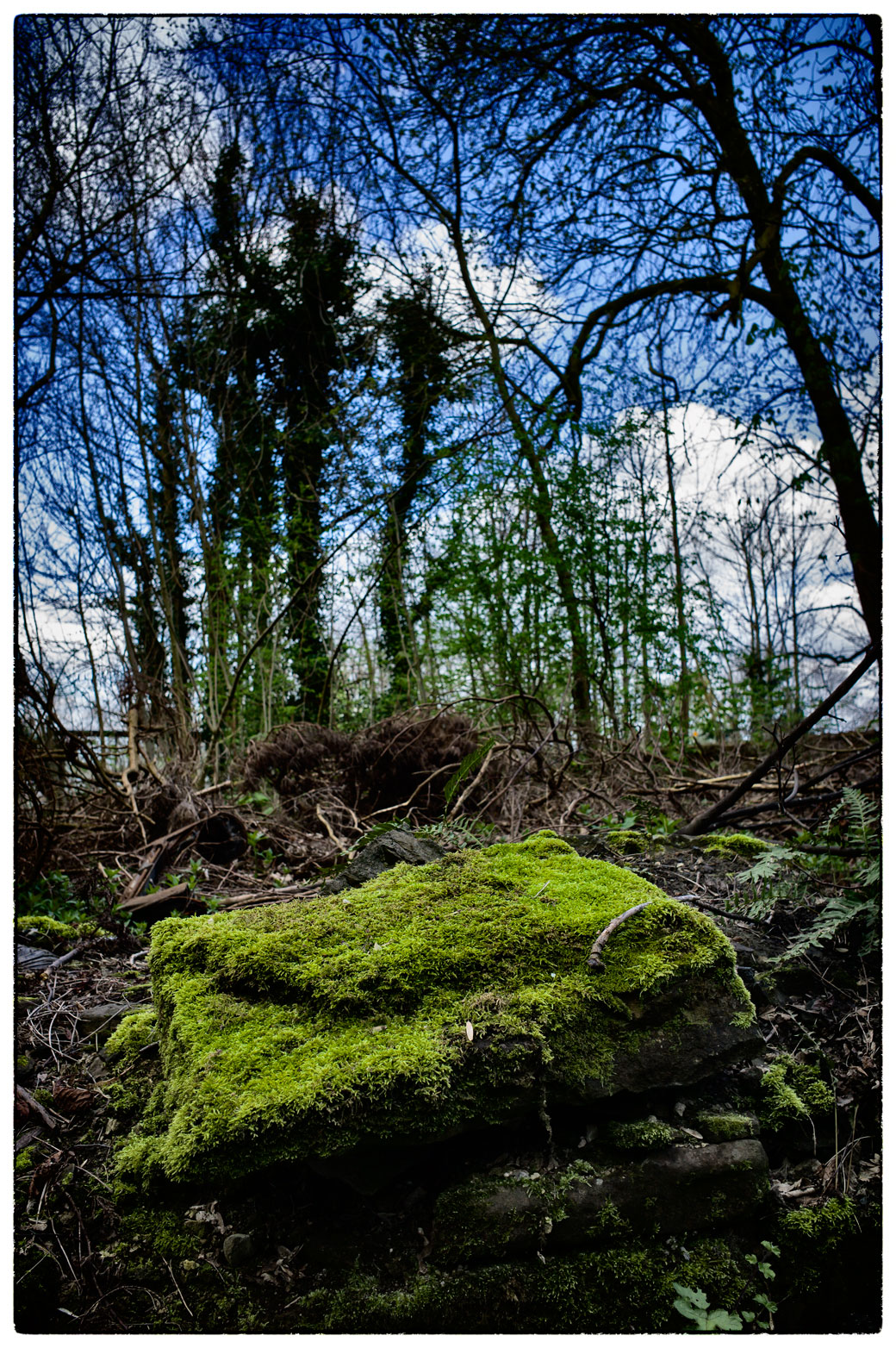 Moss covered stone.