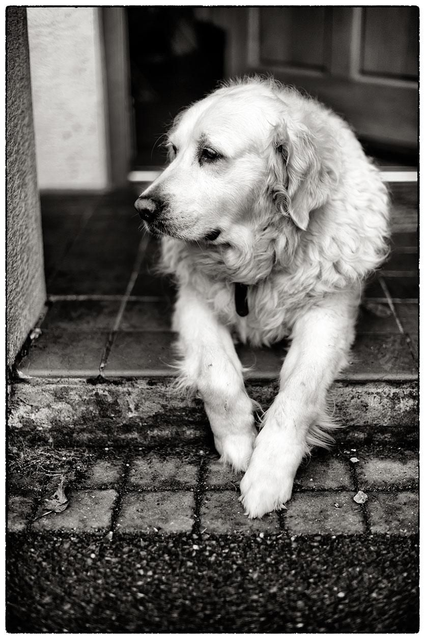 Happy dog on the doorstep.