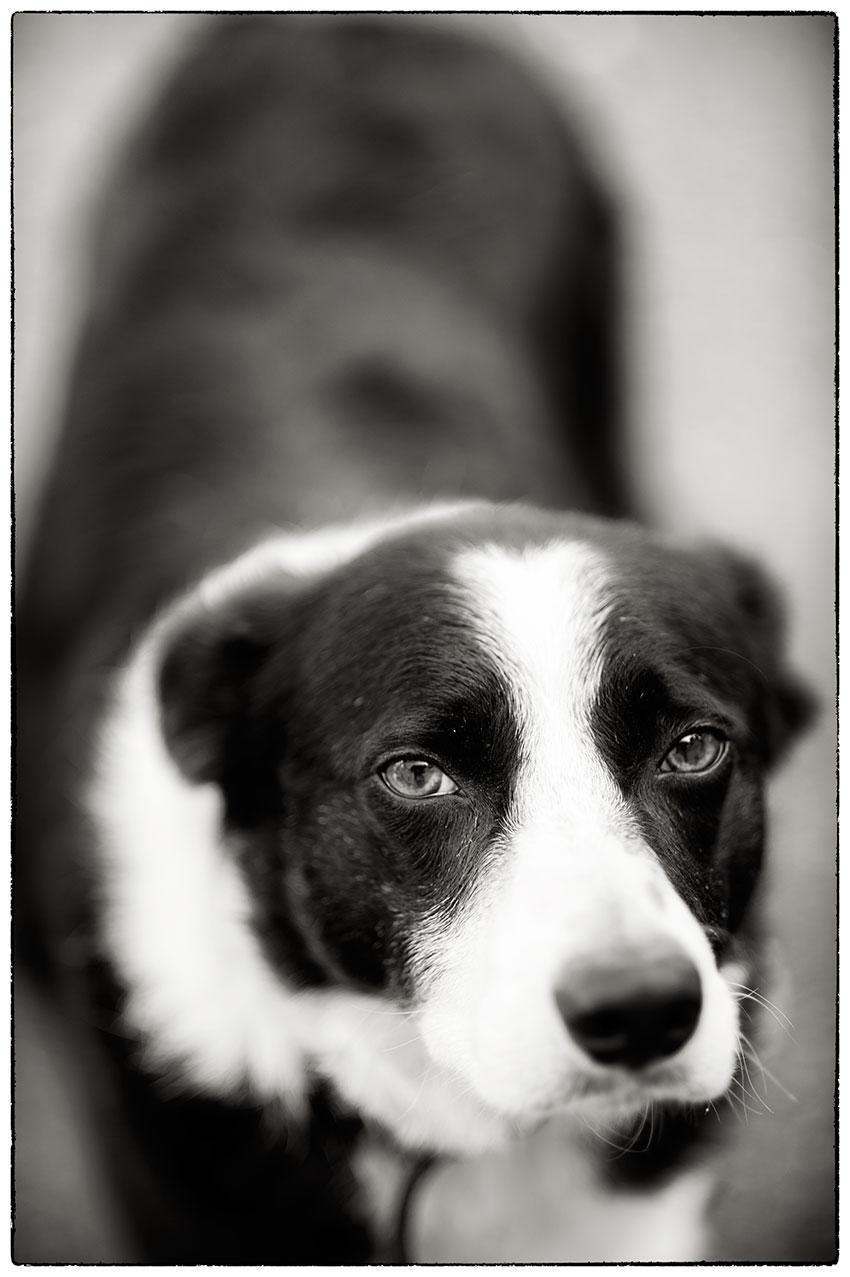 Barney in streamlined mode, ears folded. Sometimes I wish he could talk.