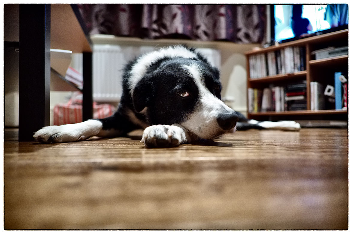 Barney being slightly relaxed. He's been very attentive and everyone's shadow, since Harley moved out.