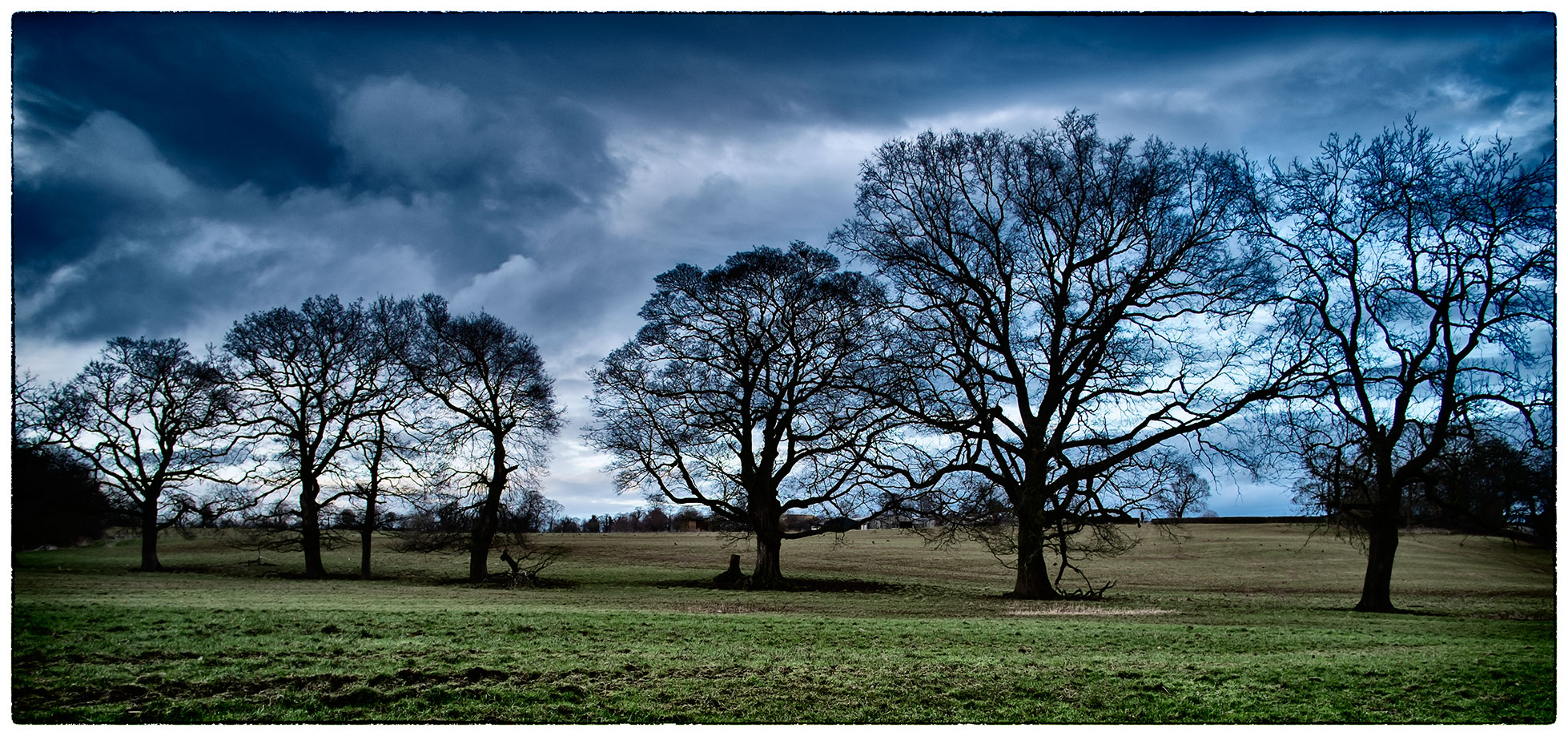 A line of varying trees at Erddig .