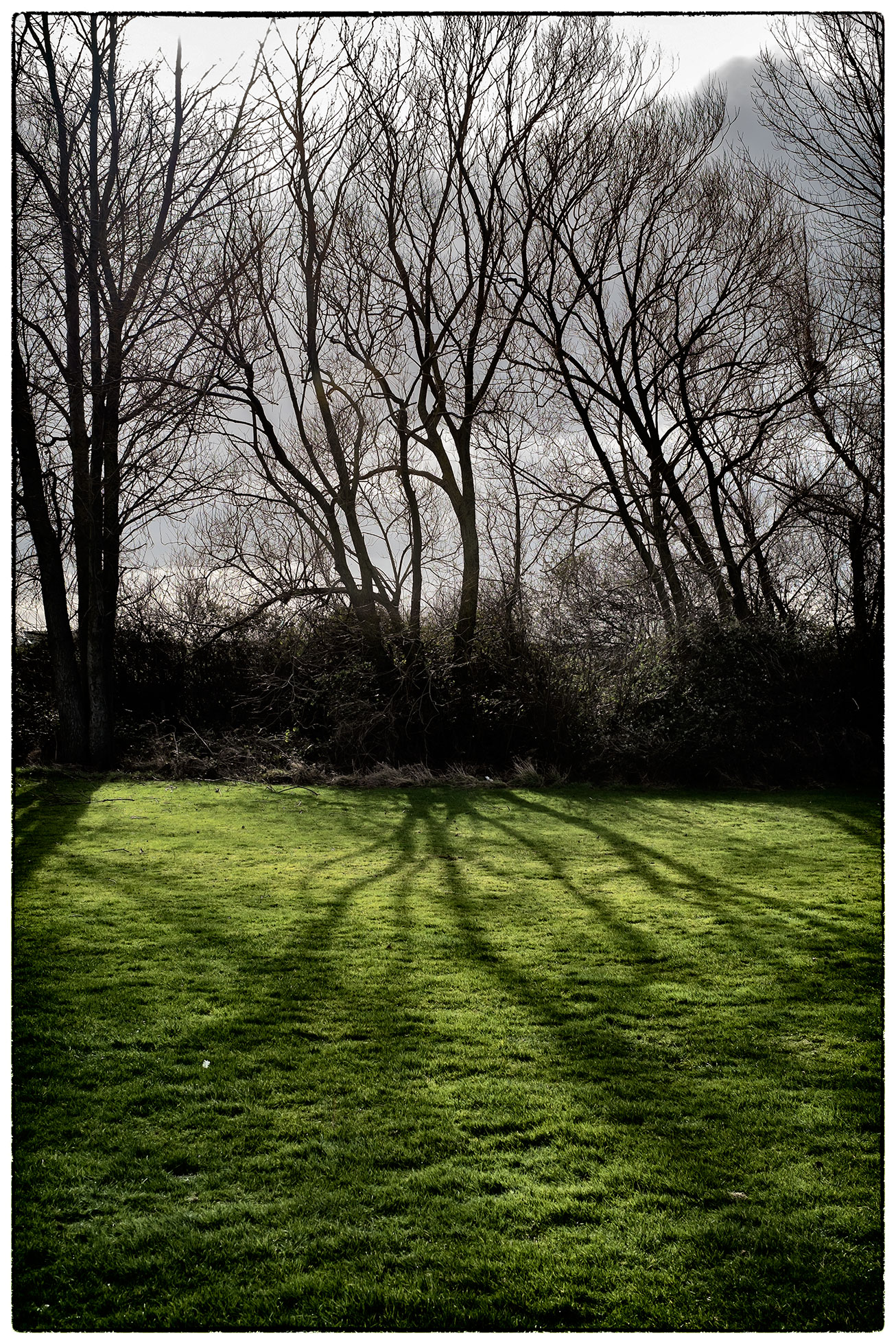 Trees and shadows next to the football pitch at Rhyll this morning.