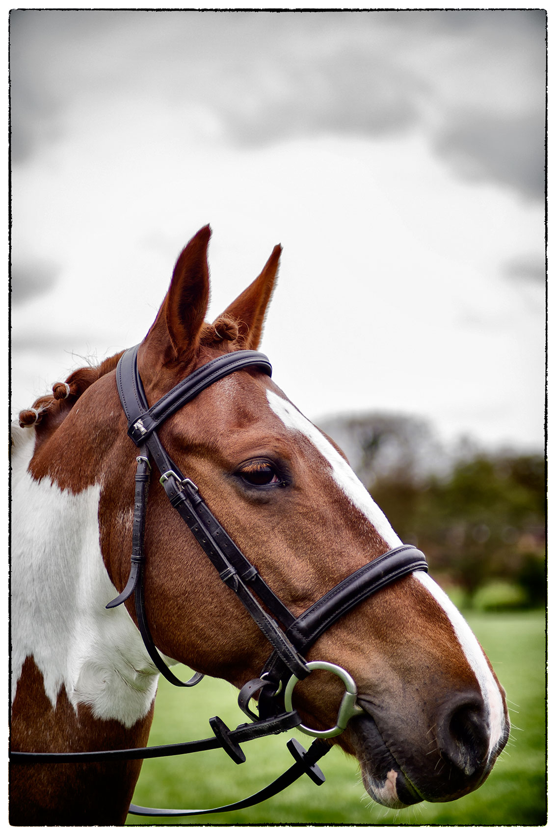 Willow, today at Bradwall Horse trials.