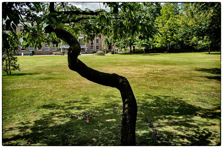 Twisted tree, Wrexham Civic Centre.