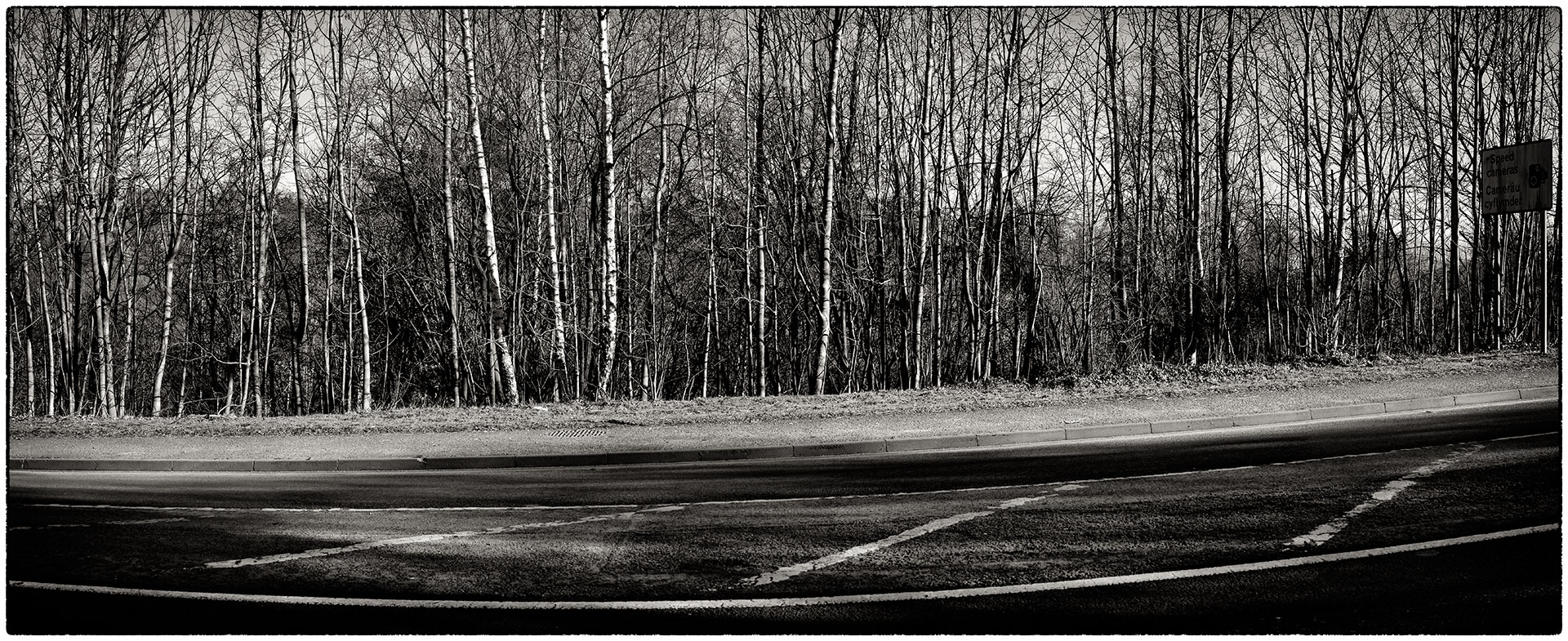 Test panoramic shot of the silver birch across the road from our house.