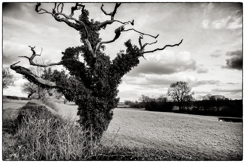 Tree_7790.jpg