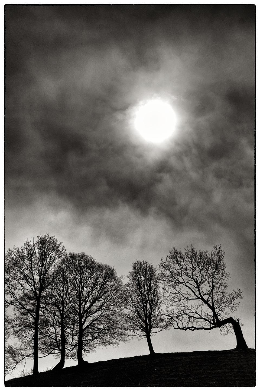 Tree_silhouettes_7970.jpg