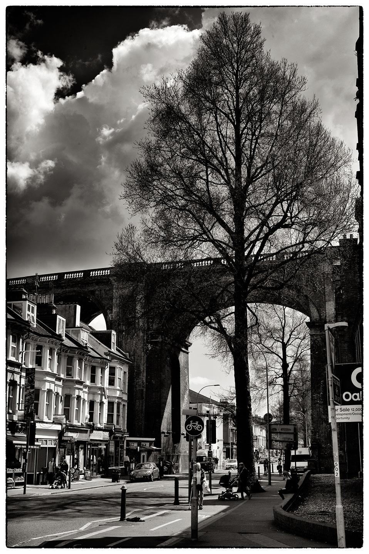 Tree_Brighton_5807.jpg