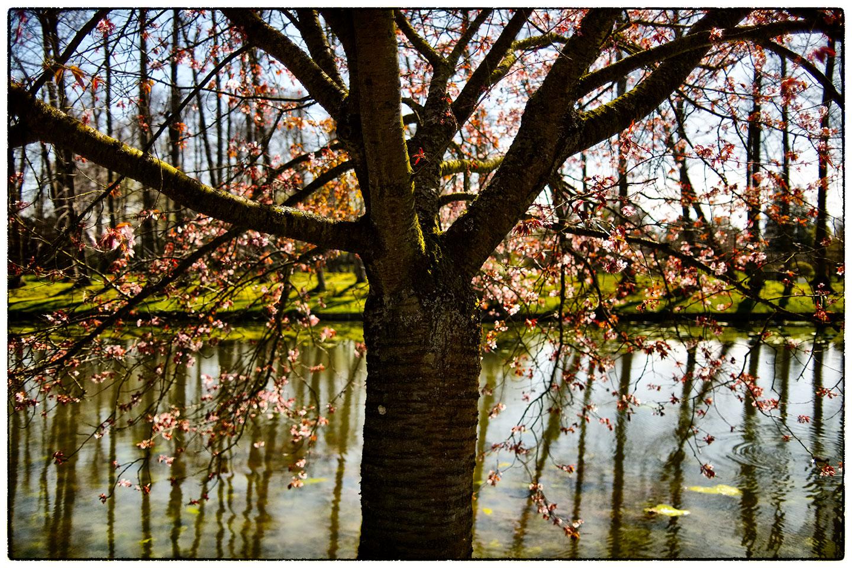Blossom_2_1071.jpg