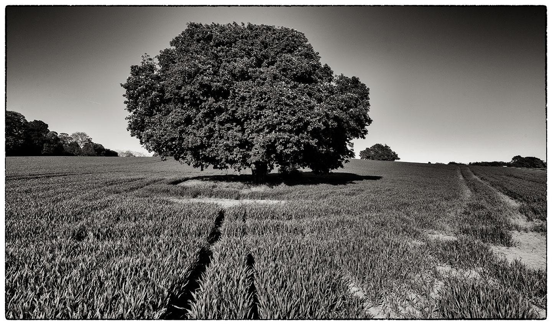 Tree_1551.jpg