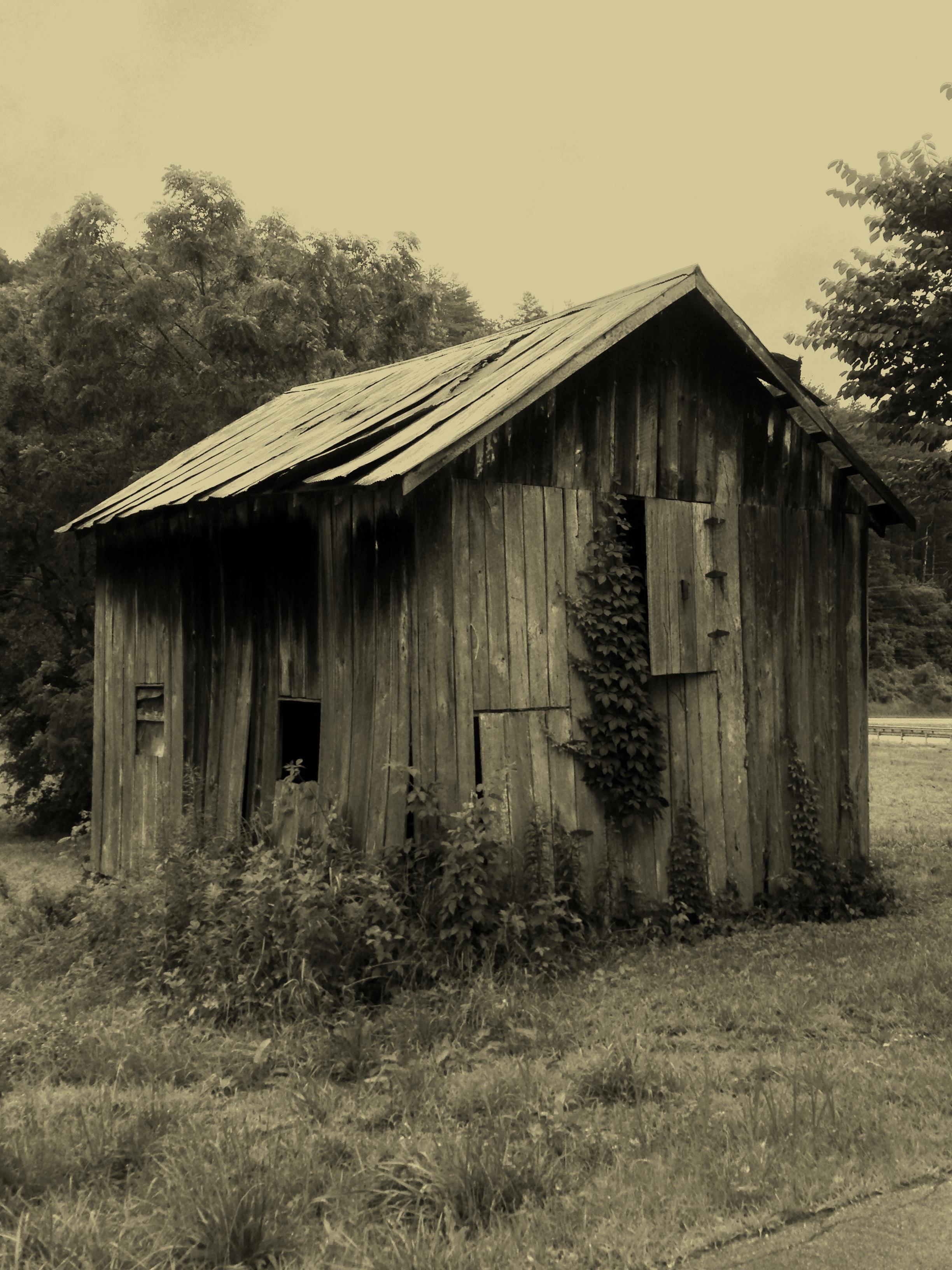 shed3.jpg