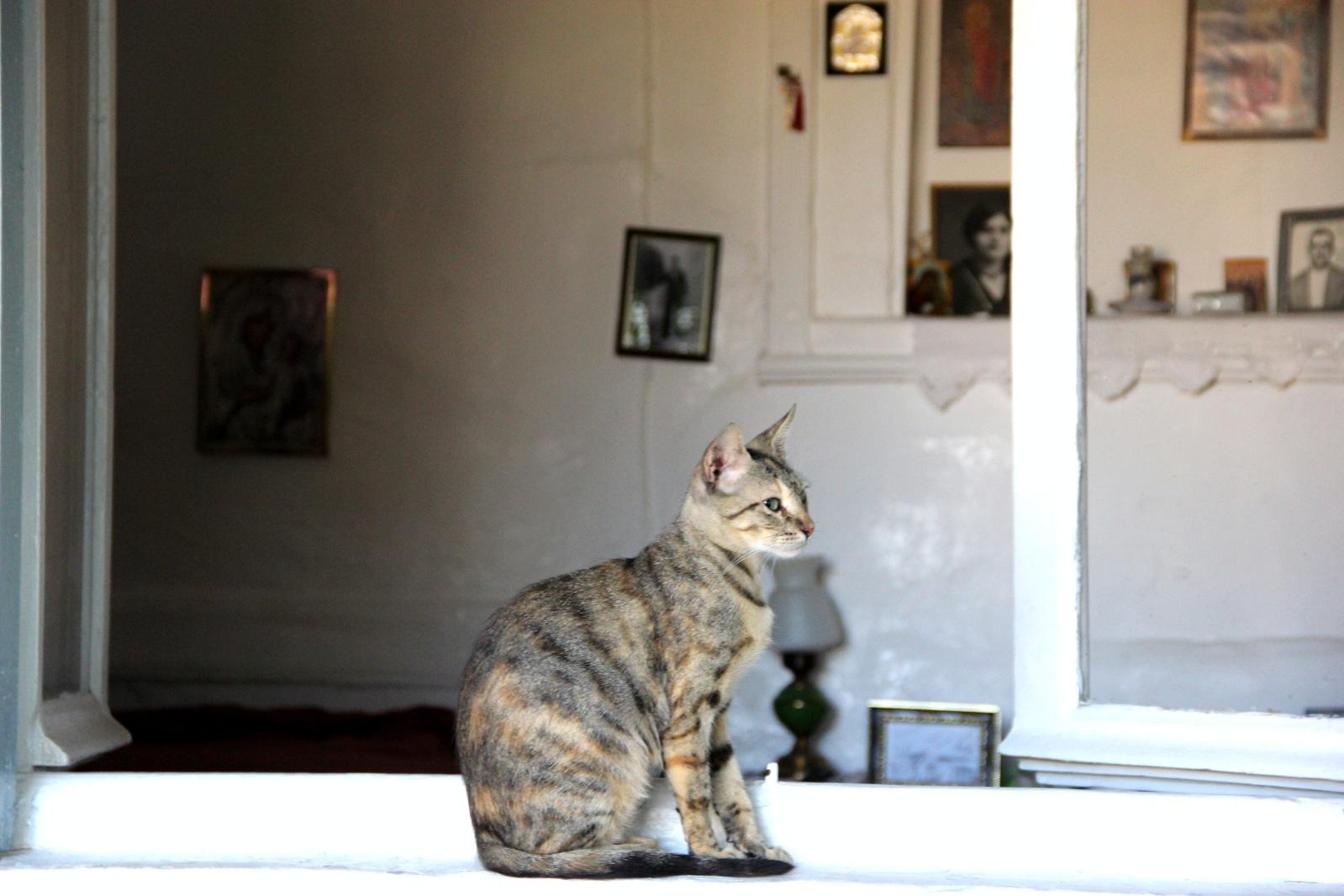 cat greece.jpg