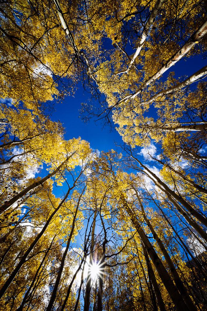 colorado-autumn-aspens03.jpg