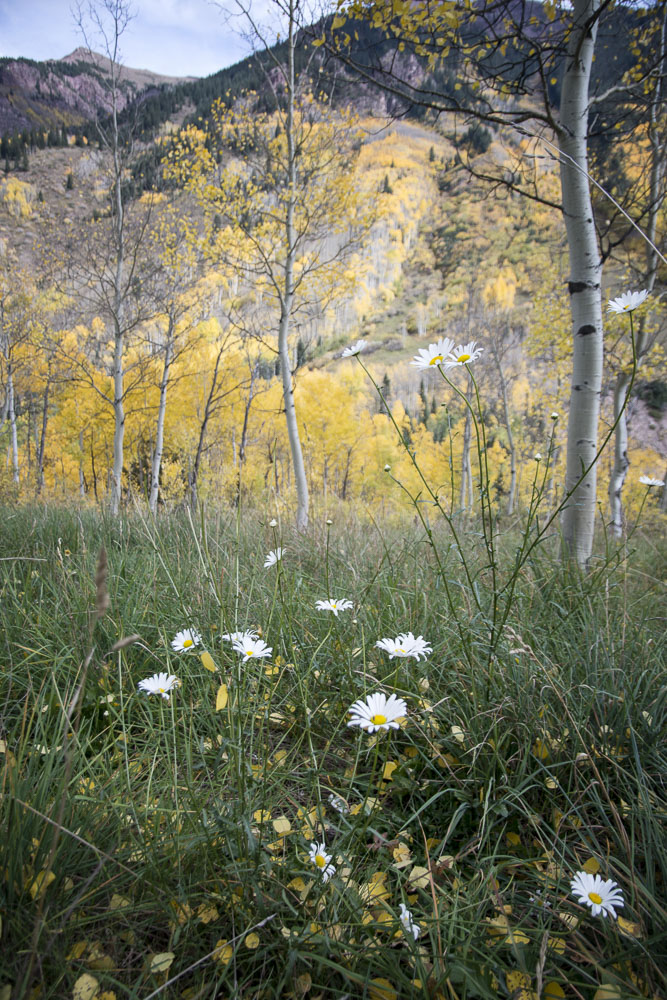 colorado-autumn-aspens06.jpg