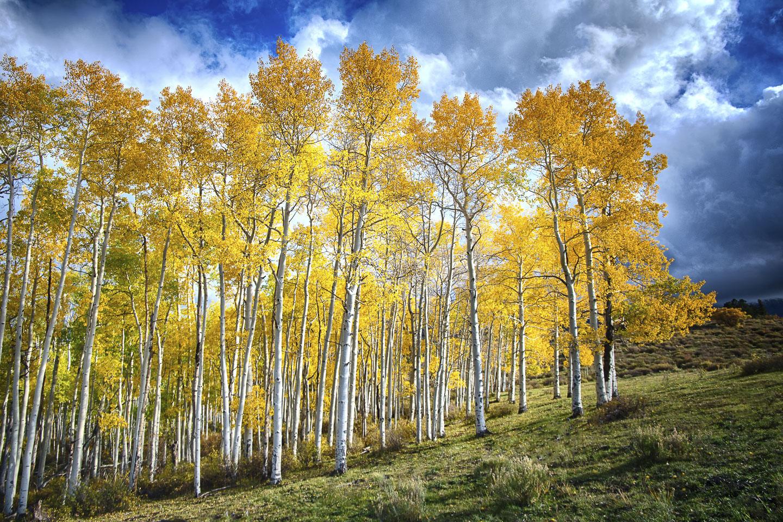 colorado-autumn-aspens15.jpg