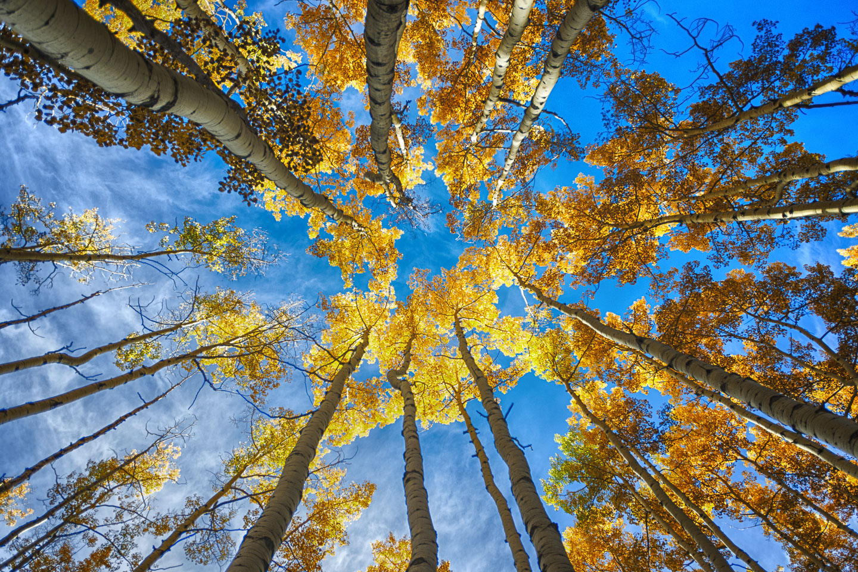 colorado-autumn-aspens22.jpg