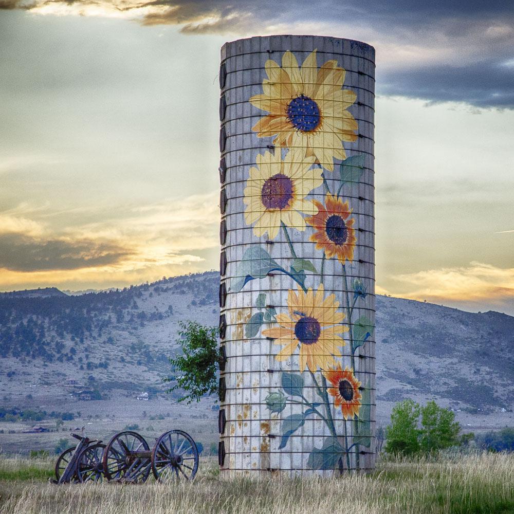 colorado-sunflower-fields-04.jpg