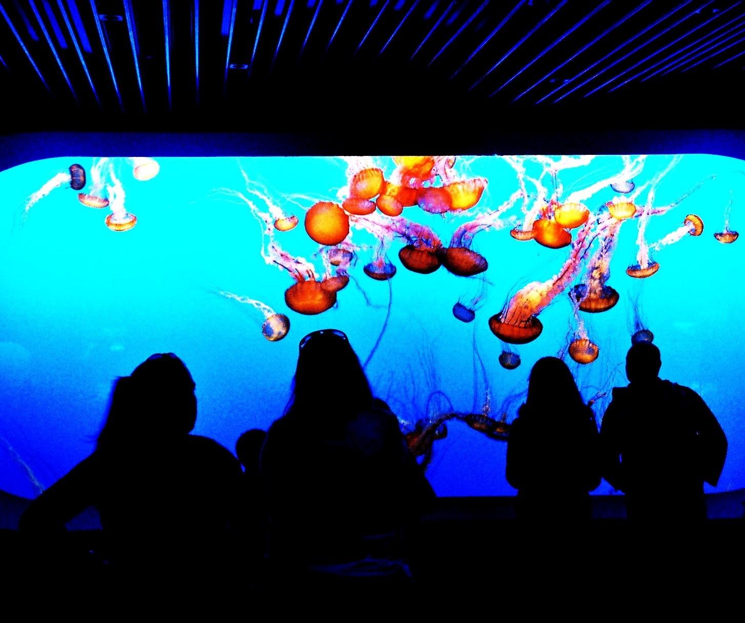 Aquarium (2).jpg
