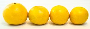 grapefruit-sizes-small.jpg