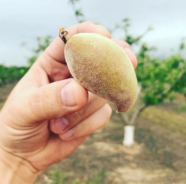 - A misshapen peach, due to a lack of