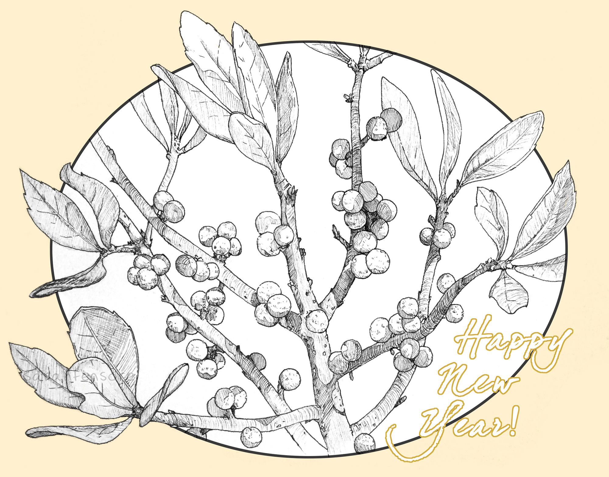 bayberry-w.jpg