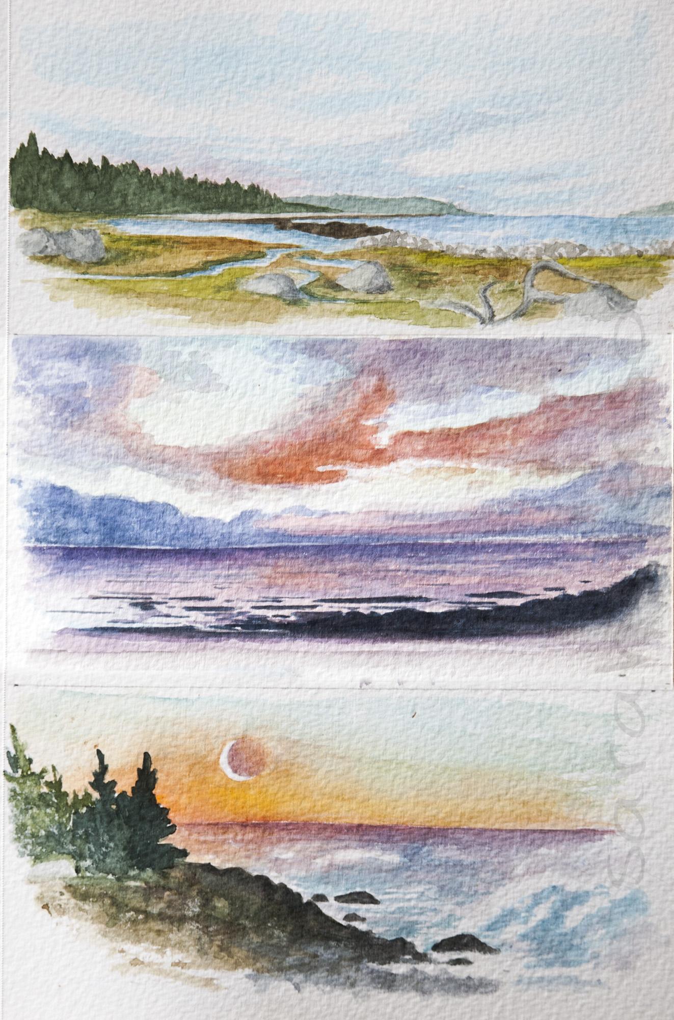Seal Island Scenes