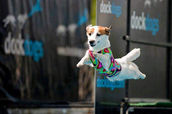 Dory - Dock Dogs Junior Big Air Swanback's Adorable