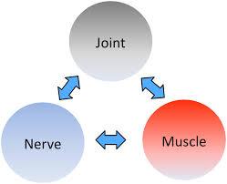 From, Shacklock M, Clinical Neurodynamics, Elsevier, Oxford, 2005.