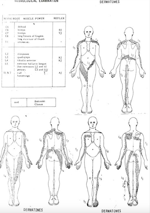 Understanding dermatomal patterns for the neurological examination