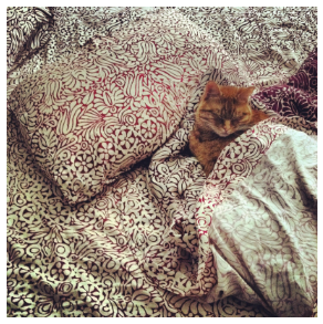 My cat Walter, who gets plenty of sleep.