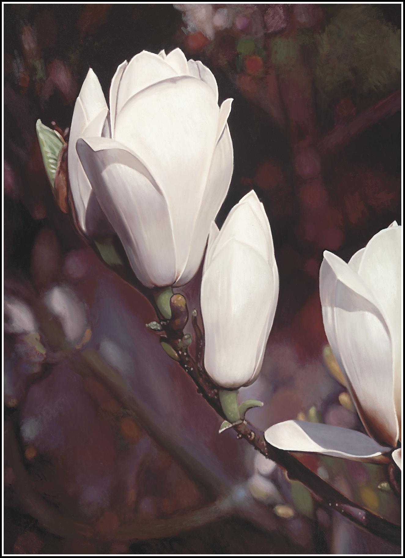 Magnolia 5.png