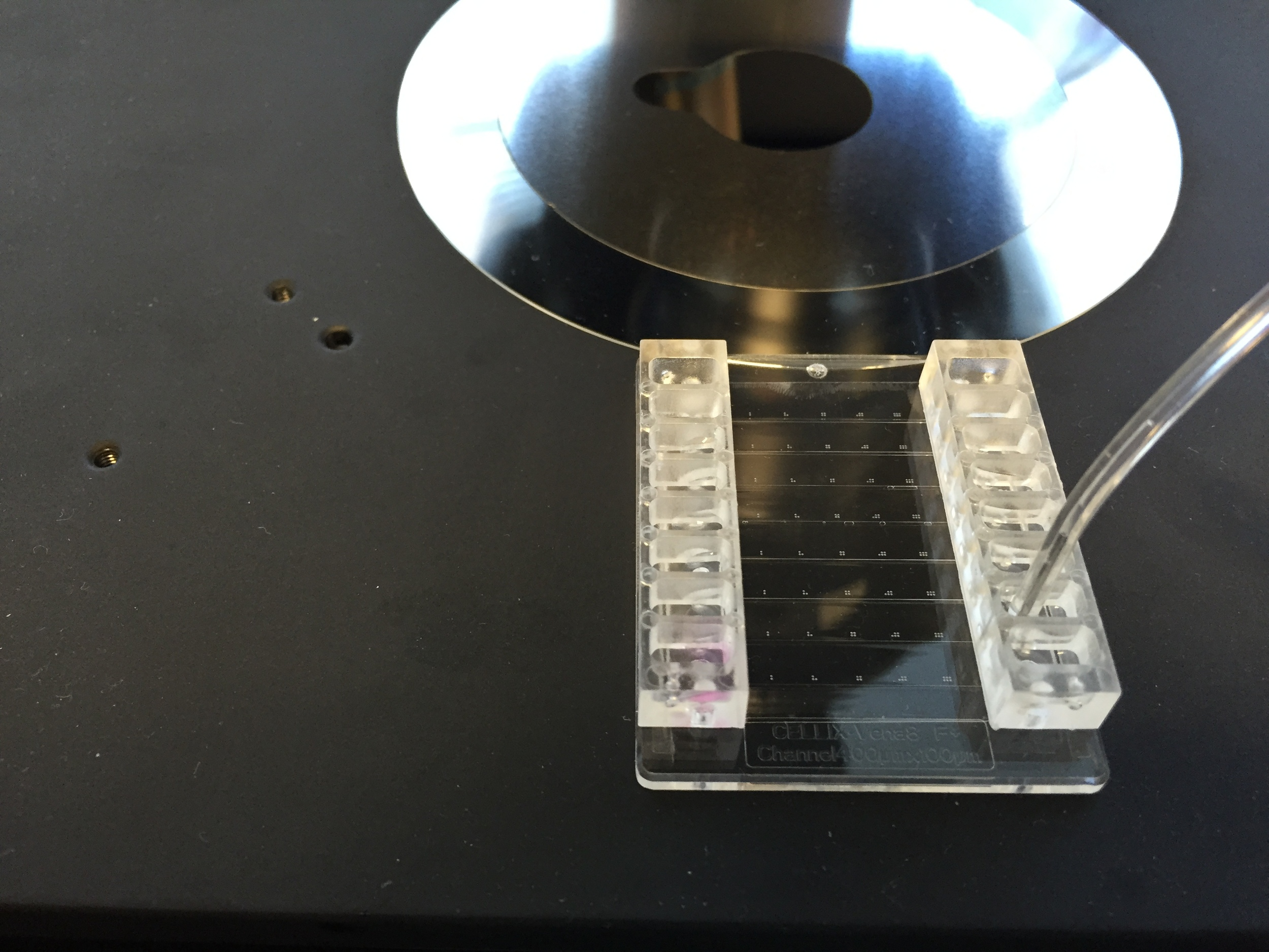 Cells inserted into microfluidics
