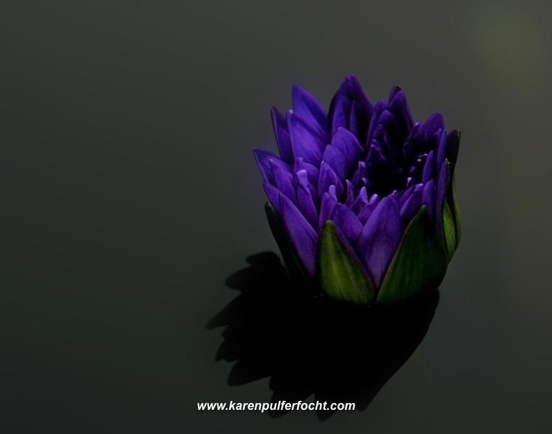 Lonesome Lily .JPG