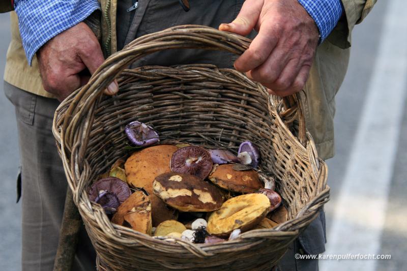 Mushroom Hunting 02.JPG
