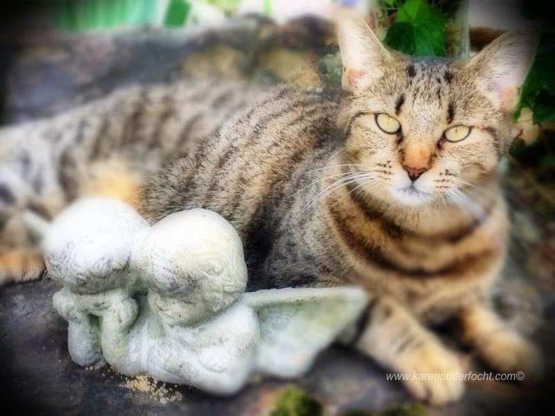 ©Karen Pulfer Focht- Cute Animals006.JPG