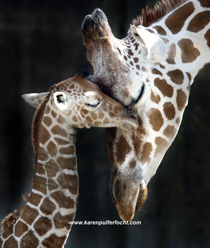 ©Karen Pulfer Focht- Cute Animals007.JPG