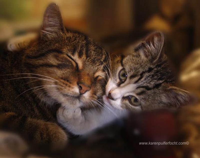 ©Karen Pulfer Focht- Cute Animals012.JPG