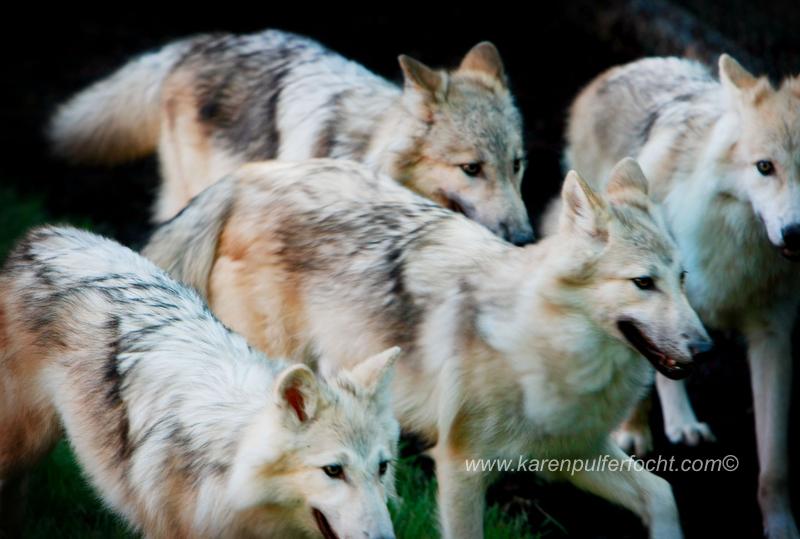 ©Karen Pulfer Focht- Cute Animals013.JPG