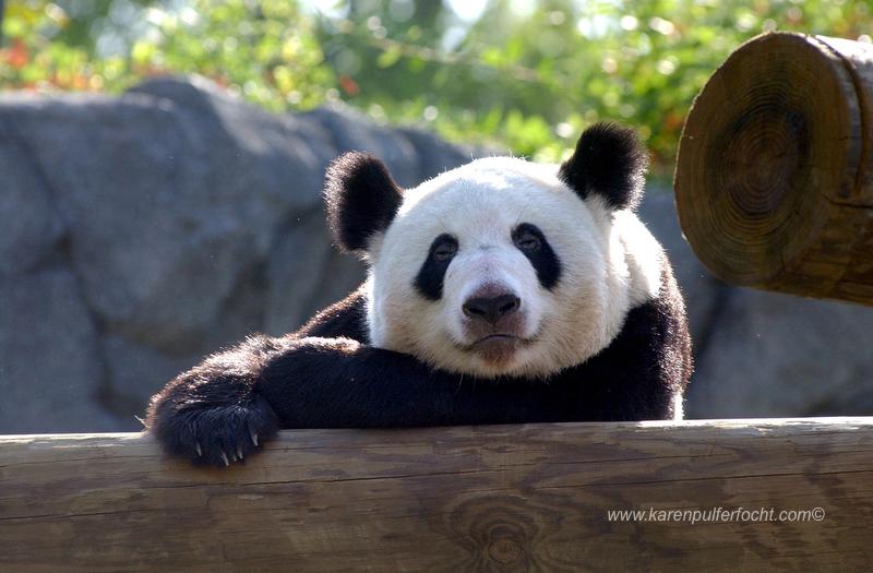 ©Karen Pulfer Focht- Cute Animals014.JPG