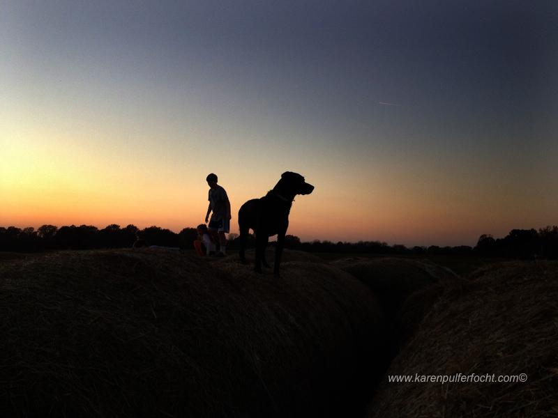 ©Karen Pulfer Focht- Cute Animals018.JPG