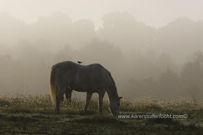 ©Karen Pulfer Focht- Cute Animals028.JPG