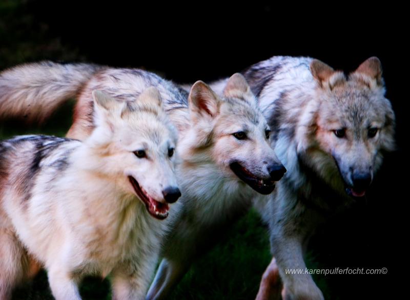 ©Karen Pulfer Focht- Cute Animals036.JPG