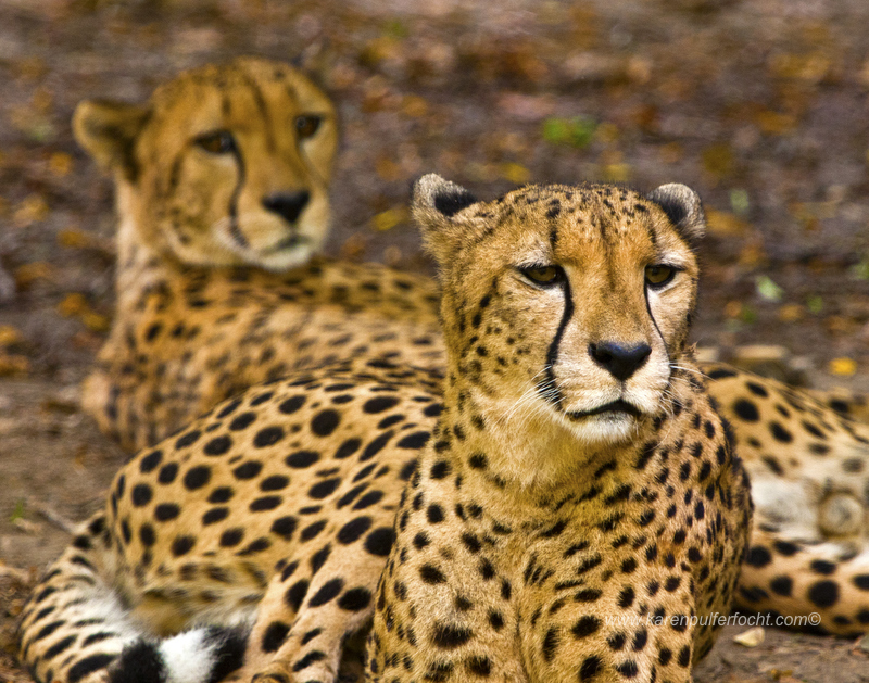 ©Karen Pulfer Focht- Cute Animals042.JPG